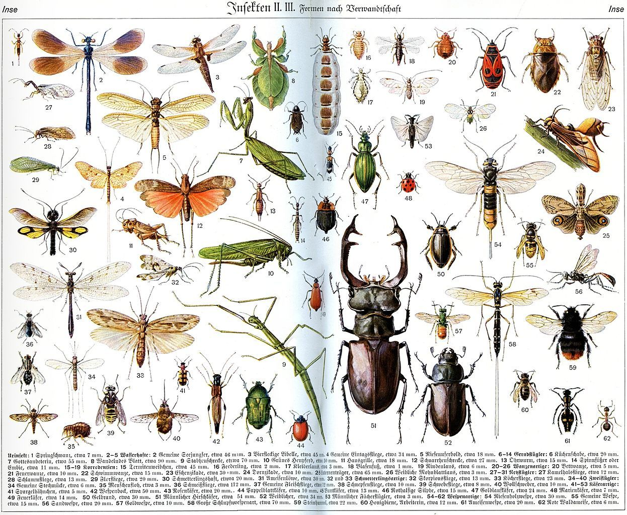 Insects From Der Neue Brockhaus Vol 2