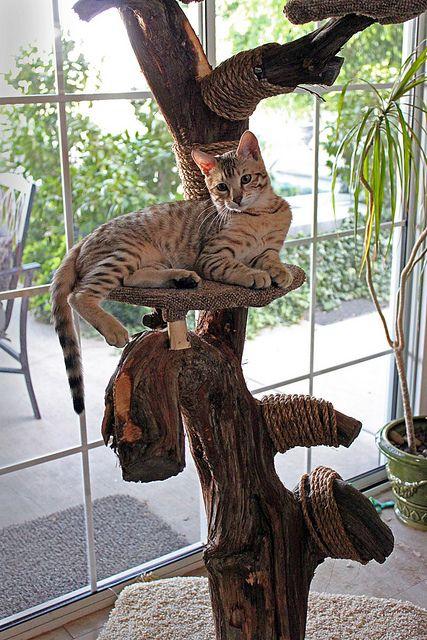 Dexter S Cat Tree Cat Trees Homemade Indoor Cat Cat Tree