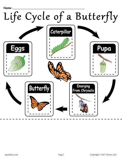 Life Cycle Of A Butterfly Printable Worksheet Egitim Bilim Deneyleri Kelebekler