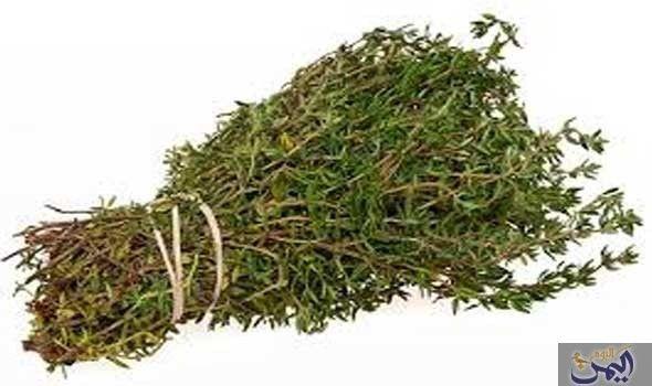 فوائد قد لا تعرفها عن الزعتر البري Health Benefits Of Thyme Herbs Herbal Medicine