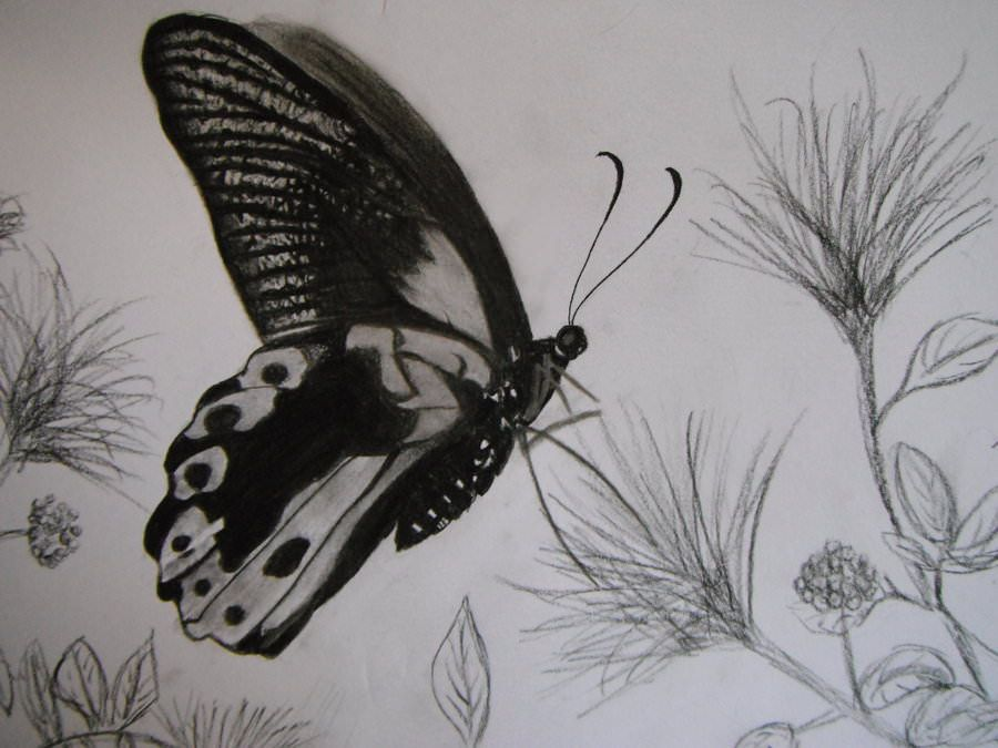 13 butterfly drawings pencil drawings sketches freecreatives