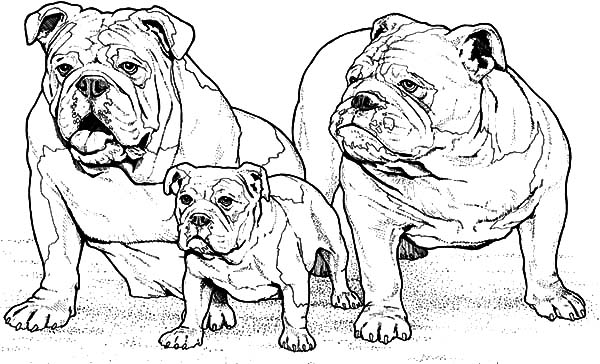Bulldog Family Coloring Pages Best Place To Color Family Coloring Pages Dog Coloring Page Family Coloring