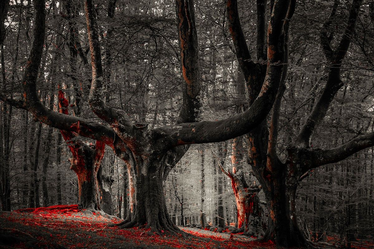 Photo Monsters of the Wood by Arima Ilhun on 500px