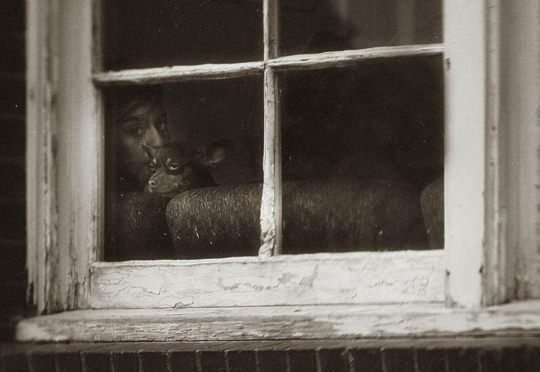 'Window Watchers'