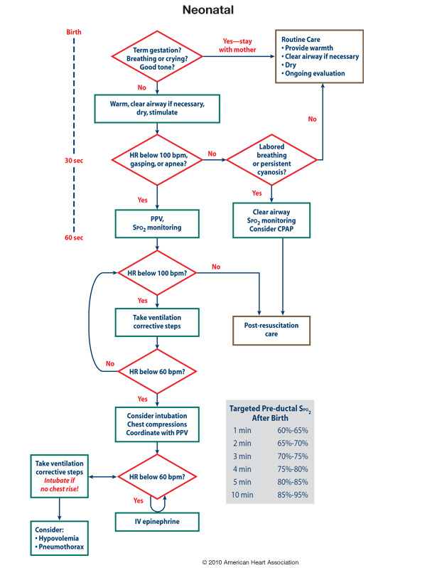 nrp flow diagram nrp flow chart | midwifery | diagram, flow, nicu