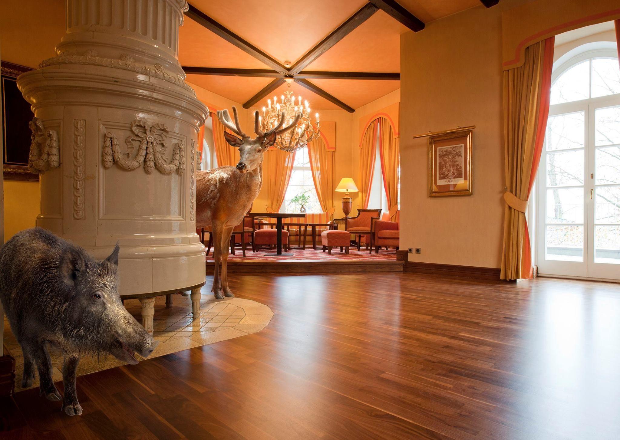 Pin En Inspirational Commercial Wood Floors