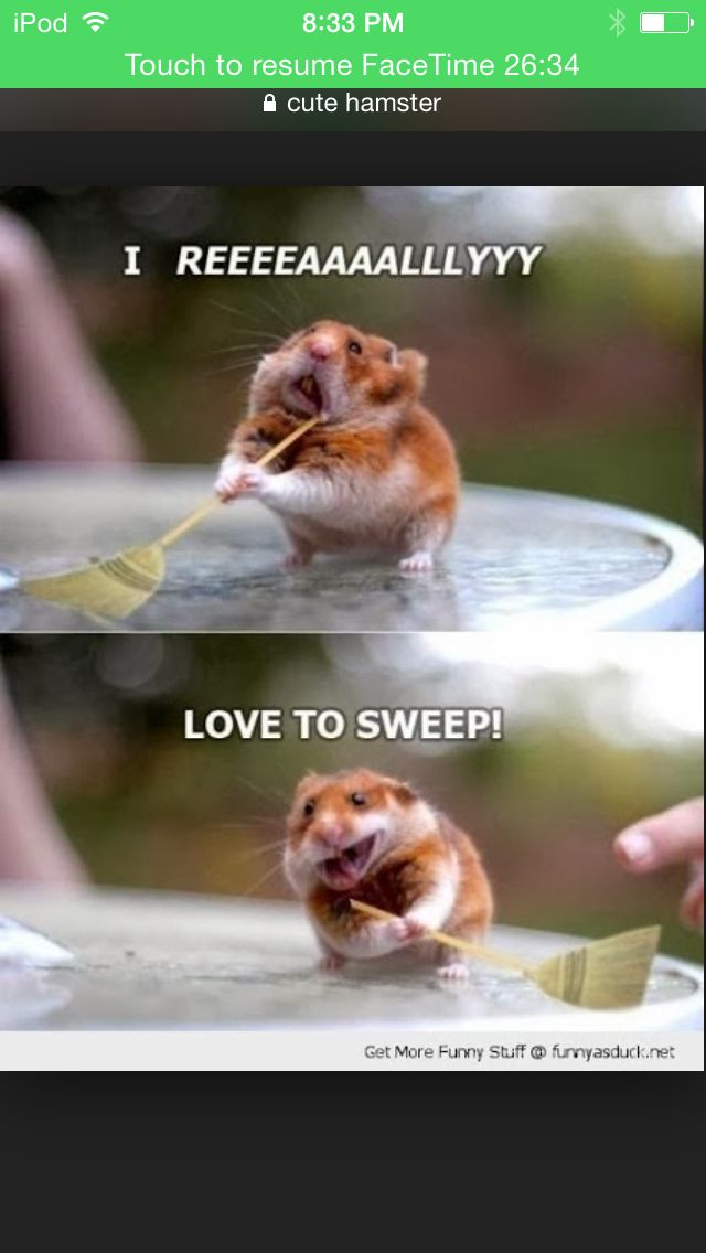 I Am A Cleaning Hamster Hello Cute Animal Pictures Cute Funny Animals Funny Hamsters