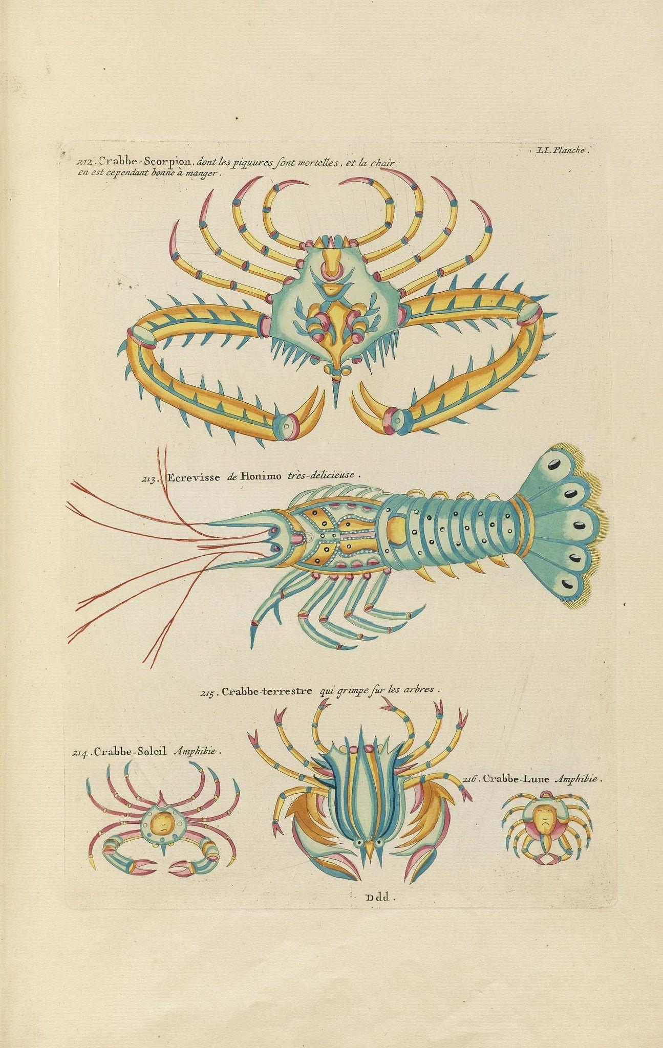 Poissons, ecrevisses et crabes, de diverses couleurs et figures extraordinaires,. A Amsterdam,Chez Reinier & Josué Ottens,1754.. biodiversitylibrary.org/page/50095181