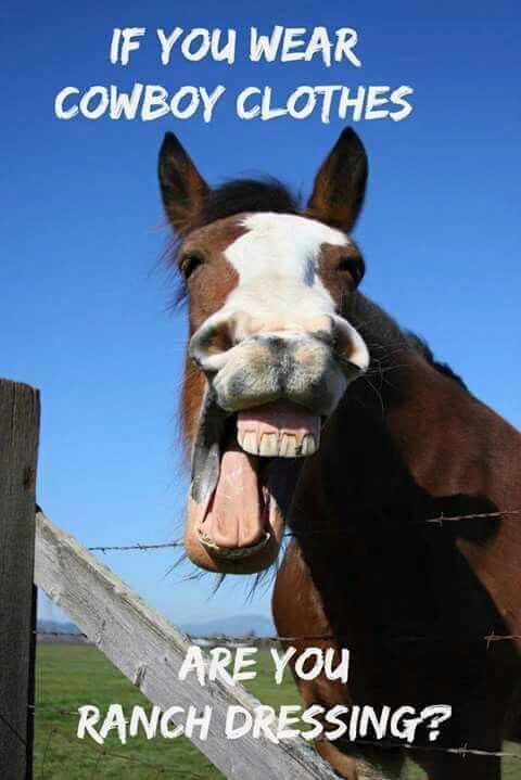 Horse Jokes For Adults : horse, jokes, adults, Things, Horse, Lovers, Understand, Funny, Animal, Jokes,, Memes,, Pictures