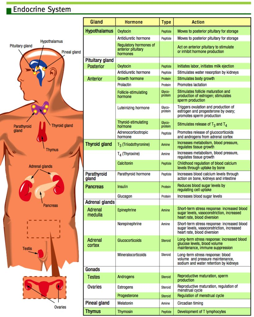 Endocrine system function and structure images about nursing on pinterest addison   also rh
