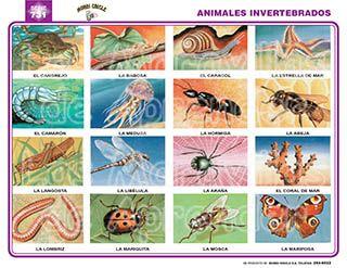 IMAGENES DE ANIMALES VERTEBRADOS E INVERTEBRADOS  animales del