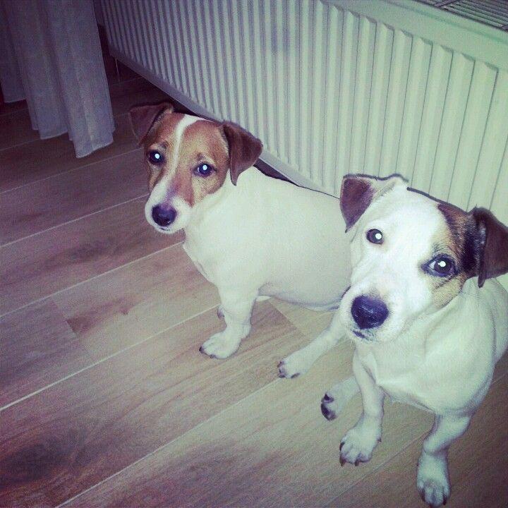 Onze hondjes