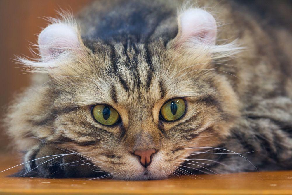 Park Art|My WordPress Blog_Cheapest Cat Breeds In The Us