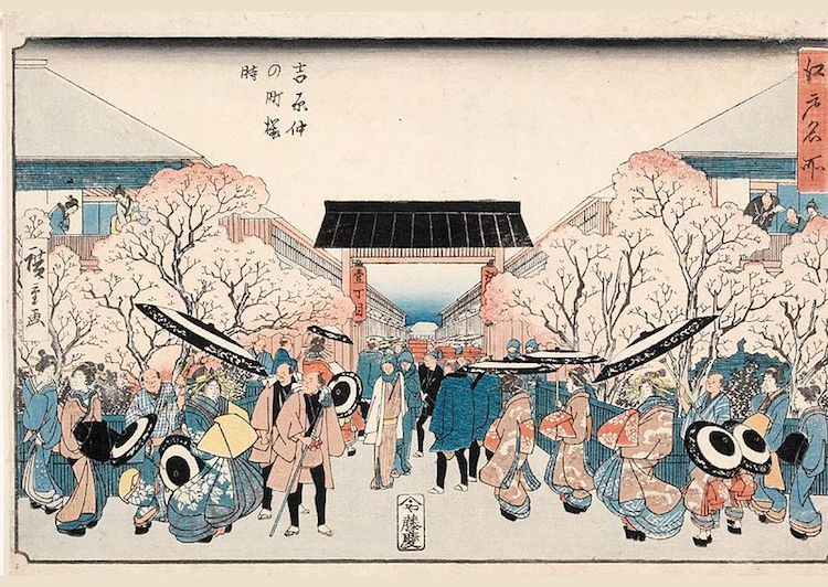 The Significance Of Cherry Blossoms In Japanese Art Culture Cherry Blossom Cherry Blossom Meaning Hanami