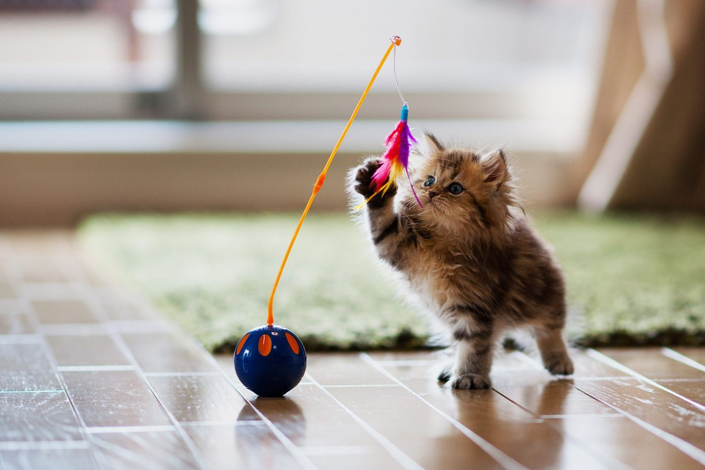 The 43 Best Gifts For Cat Lovers According To Behaviorists And Enthusiasts Cat Supplies Cute Cats Cat Toys