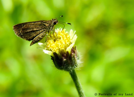 Portraits-of-my-Land-Nectar-of-flower-3