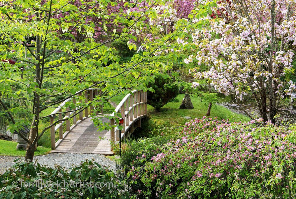 cherry blossom walk in mayne island japanese garden