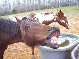 Weird Horse Faces 3