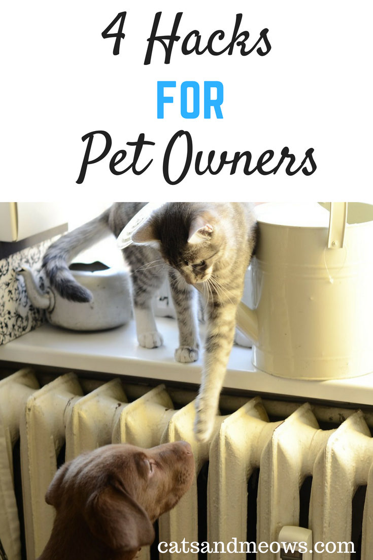 Best Hacks For Pet Owners Pet Hacks
