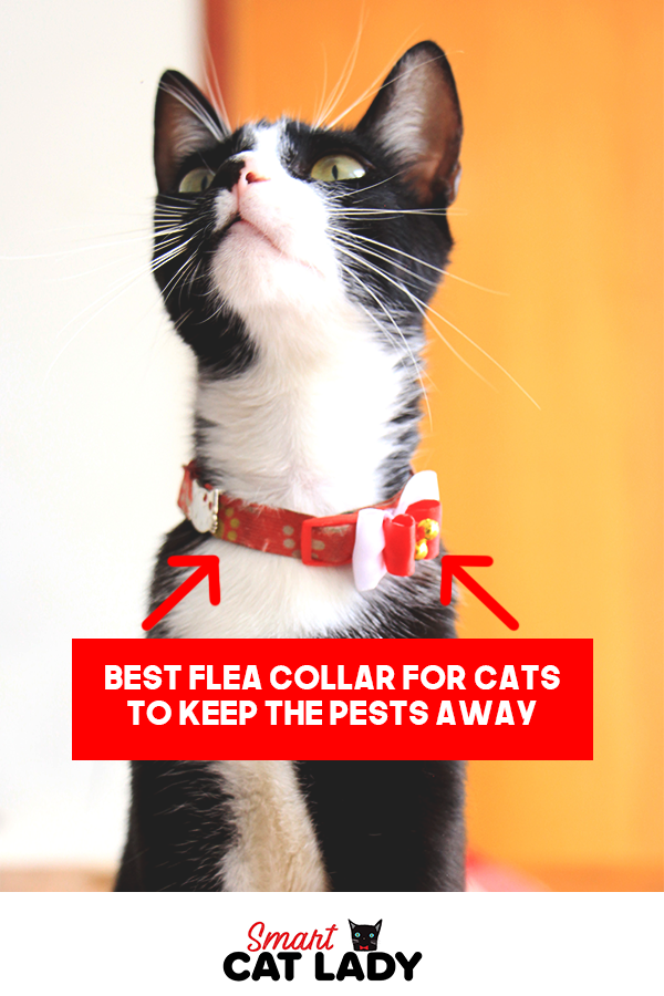 Best Flea Collar For Cats To Keep The Pests Away Cat Has Fleas Cats Fleas