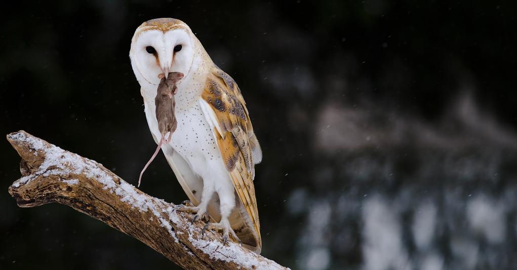 Barn Owl Hiding In Tree By Barbara Arstall On 500px Owl Barn