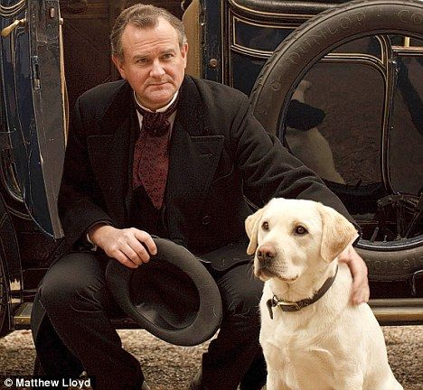 Rivals Roly Pictured Here With Hugh Bonneville Has Been Hounded Out By Highclere S Resident Labradors Downton Abbey Downton Downton Abby