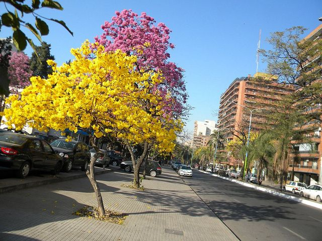 Lapachos en San Miguel de Tucumán | San miguel de tucuman, San miguel,  Paisajes
