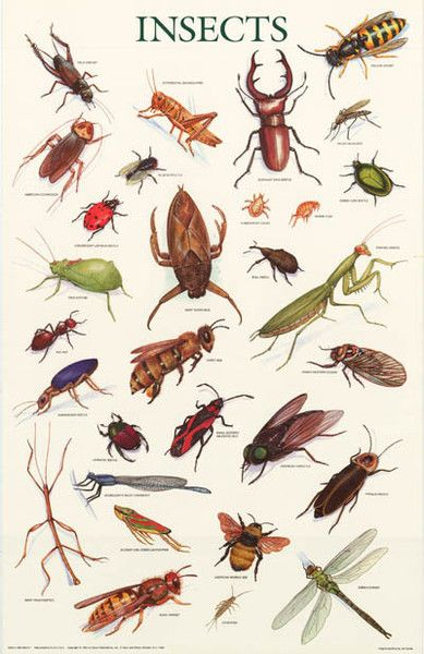 Entomology - Wikipedia