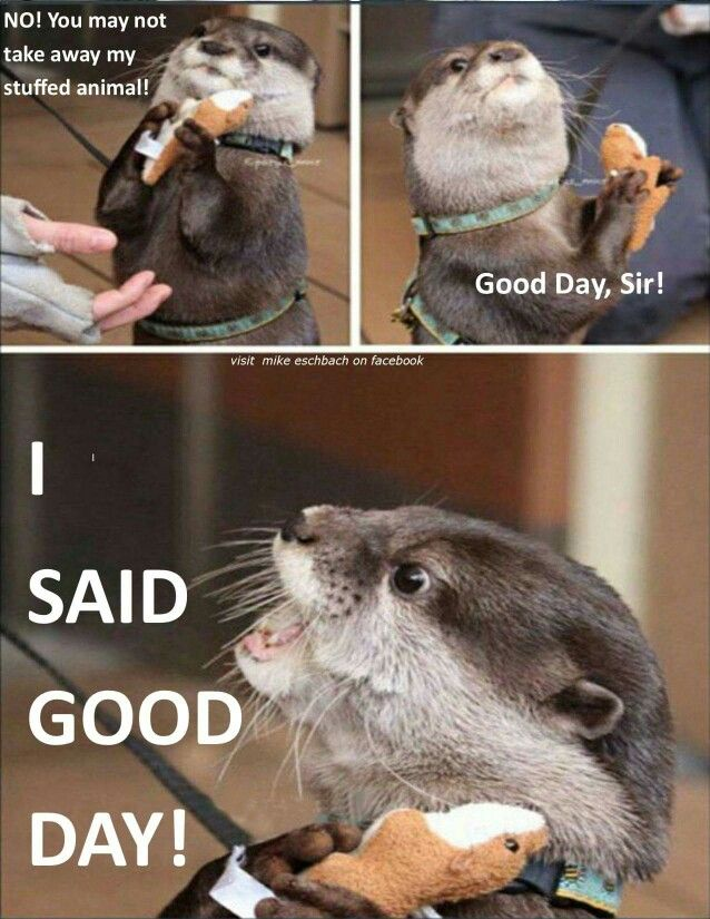 Otter Logic Animals Animals Cute Animals Funny Animals