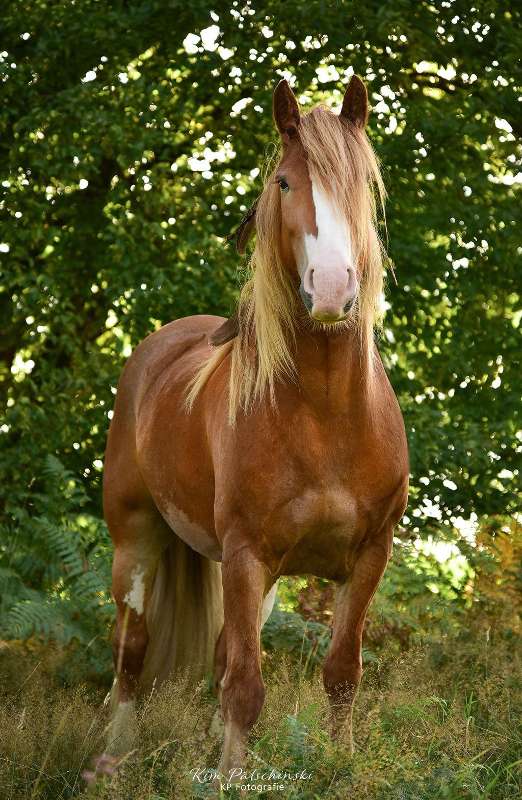 Hallo Ich Bin Whisky Stolz Pferd Pony Pferde Pferde Wallpaper Hubsche Pferde