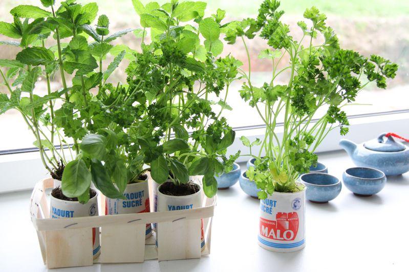 Jardin Aromatique Intérieur diy 100% récup – petit jardin aromatique d'intérieur | agri