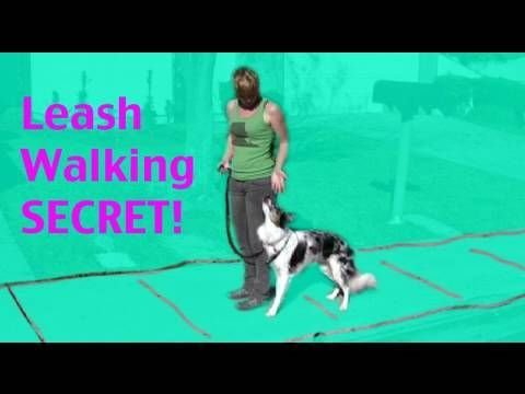 Teach Your Dog Not To Pull Teach Back Up For Leash Walking