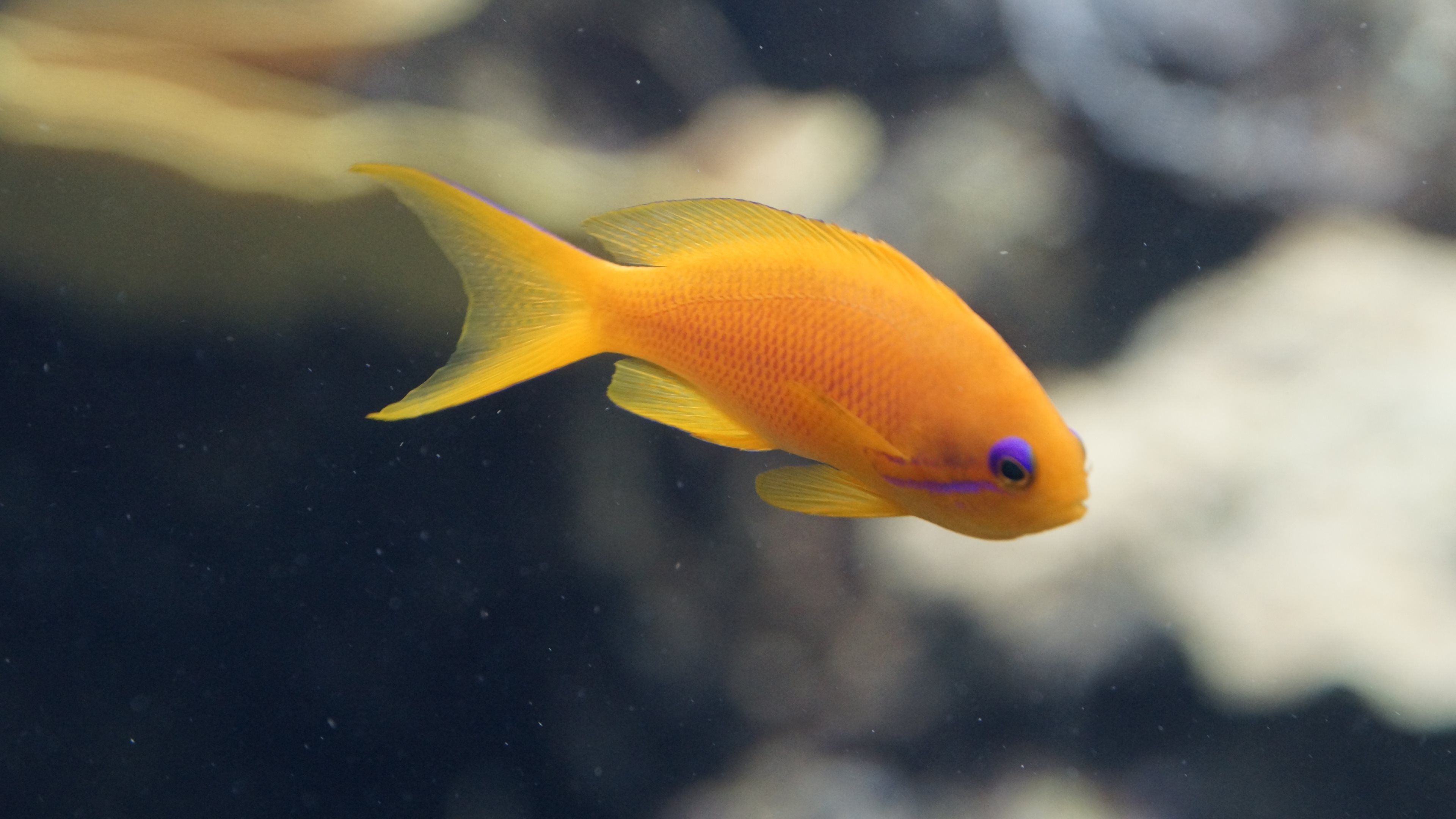 Dark coral aquarium 4K Ultra HD Wallpaper