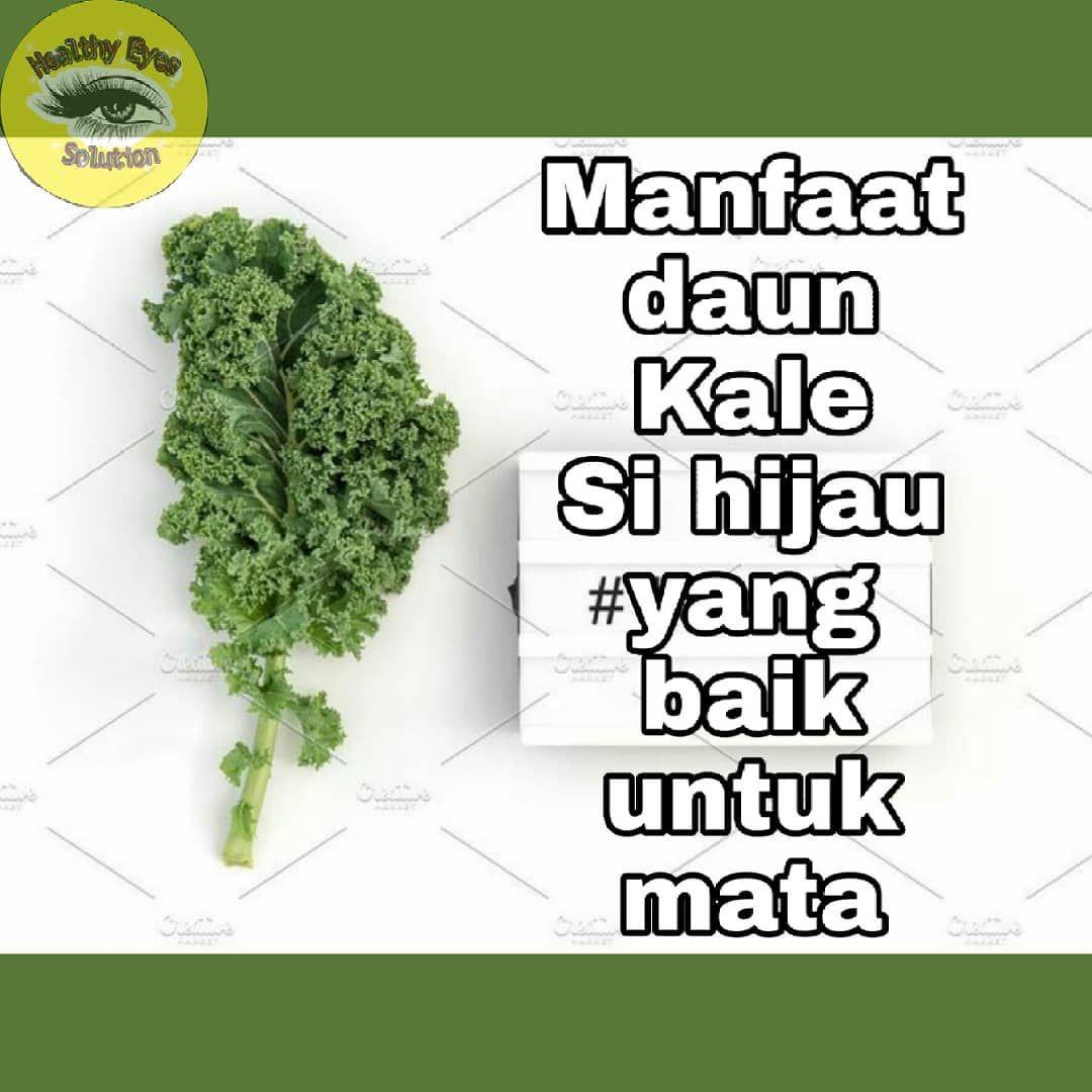 Apa Itu Kale Kale Adalah Jenis Sayuran Yang Berdaun Hijau Yang Tergolong Dalam Keluarga Kubis Seperti Brokoli Kembang Nutrition Recipes Nutrition Kale