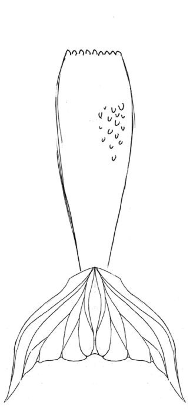 Mermaid Tails Coloring Pages Photos