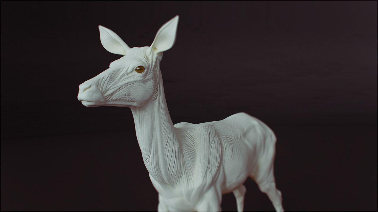 deer anatomy | Anatomy Animal in 2018 | Pinterest | Anatomy and Art ...