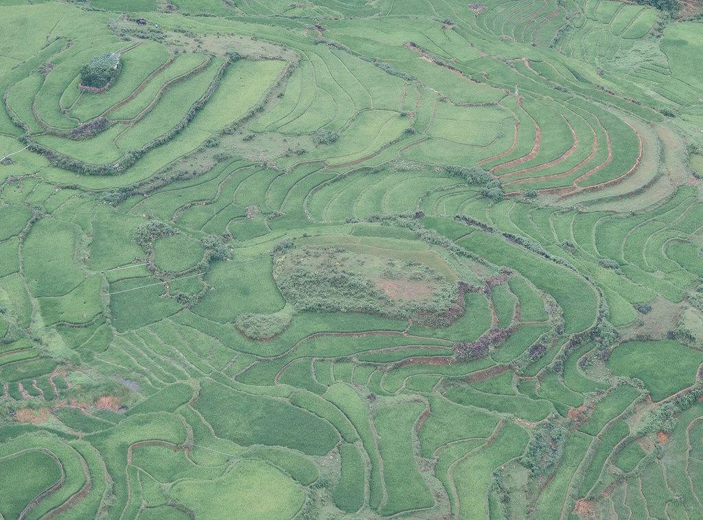 Rice Terraces of Sapa Vietnam [OC] [1600x1182]