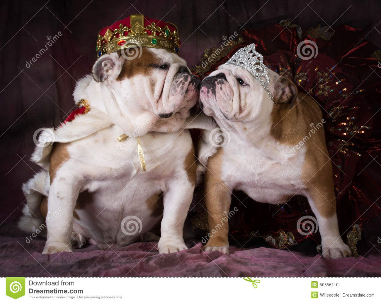 Dog King And Queen Stock Photo Image 50656110 Dog Photos