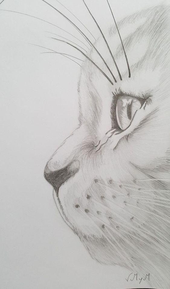 Pin De Gabbie Yasai Em Drawings Desenhos De Animais