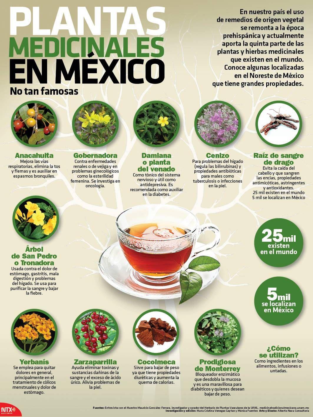 Infografia 10 Plantas Medicinales En Mexico No Tan Famosas