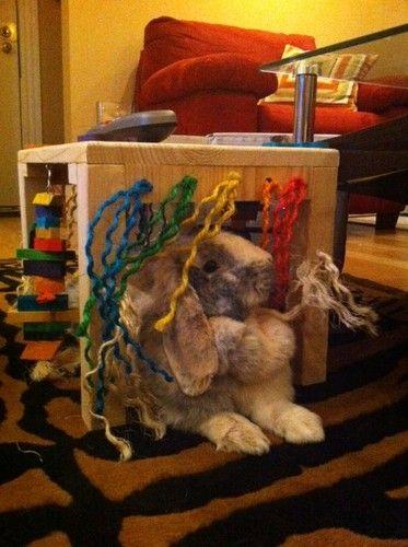 Amazon Com Original Activity Zone Rabbit Toy Pet Supplies Pet