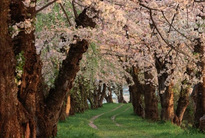 """Northern Honshu - When the famous poet Matsuo Bashō set out on his travels along the """"narrow road to the deep north"""" in 1689, he commented, somewhat despondently, """"I might as well be going to the ends of …"""