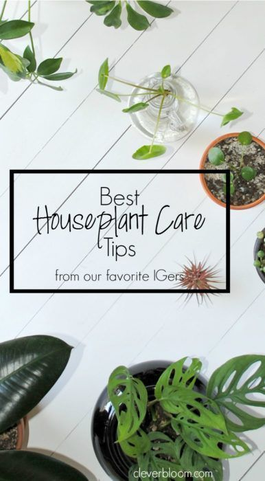 Best Houseplant Care Tips from my favorite Instagramers on Clever Bloom