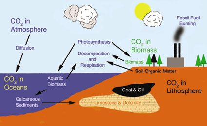 Carbon Cycle Fossil Fuels | All things chemical | Pinterest | 단순한