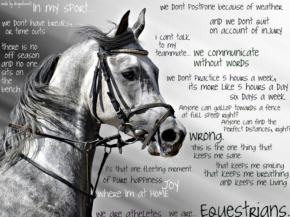 Horses, Horse Quotes, Quotes