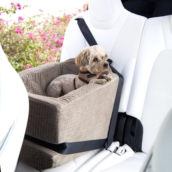 Pictures Of Car Seats For Dogs