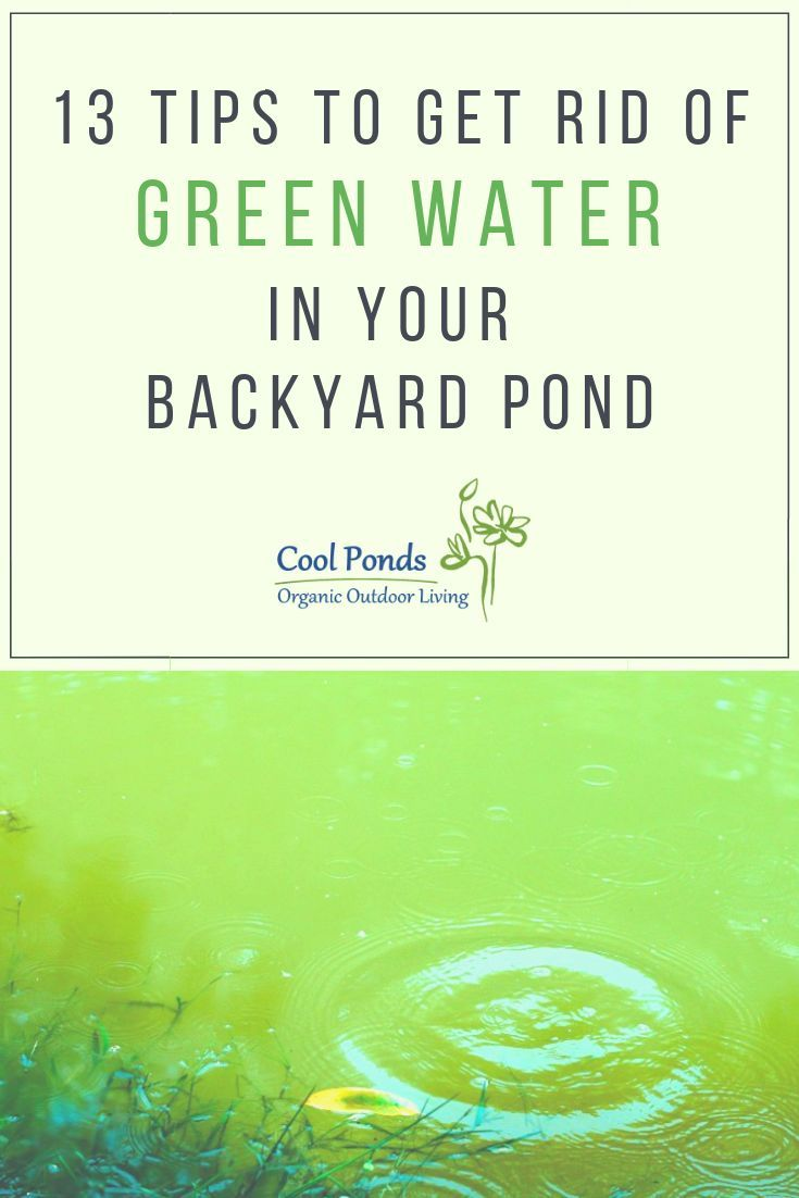 Coptrol for algae removal green pond pond cleaning