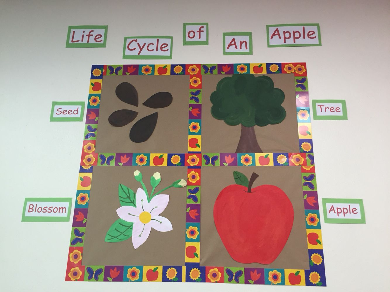 Life Cycle Of An Apple Bulletin Board With Images