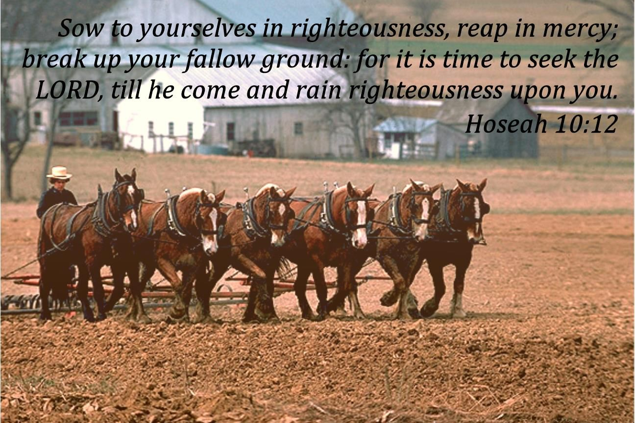 Sow in Righteousness
