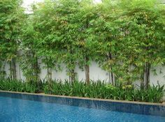 Pool Privacy Screen Ideas poolside bamboo privacy screen - could work along fences instead